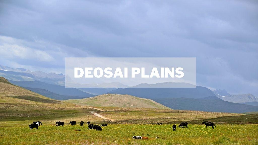 Deosai Plains